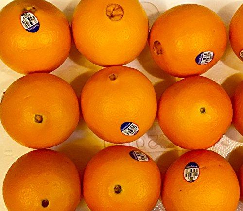 オーストラリア産 オレンジ (12個入り)