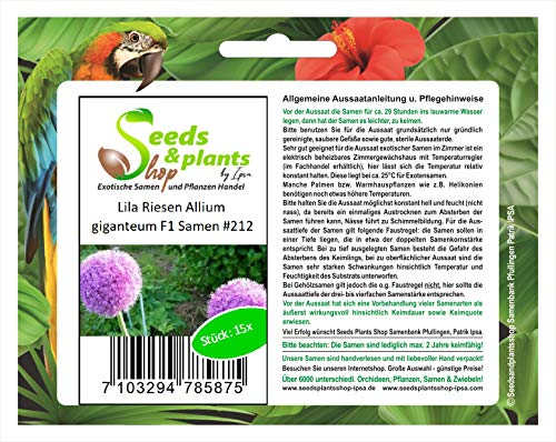 Stk - 15x Lila Riesen Allium giganteum F1 Lauch Garten Pflanzen - Samen #212 - Seeds Plants Shop Samenbank Pfullingen Patrik Ipsa