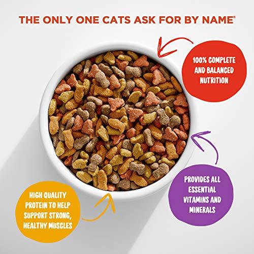 Cat | Meow Mix Original Choice Dry Cat Food, 22 Pounds, Gym exercise ab workouts - shap2.com