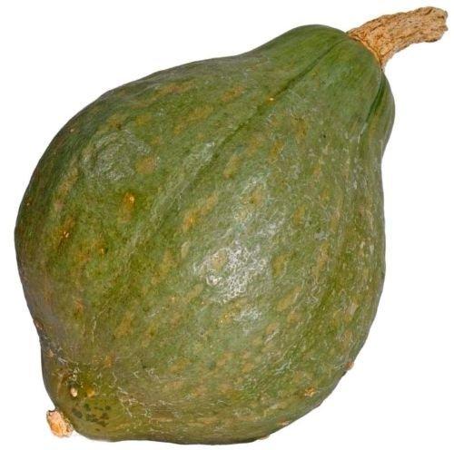 Hubbard vert vrai squash améliorée 25 graines Heirloom non OGM CombSH J45