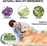 IMG-1 sugelary collare antipulci cane impermeabile
