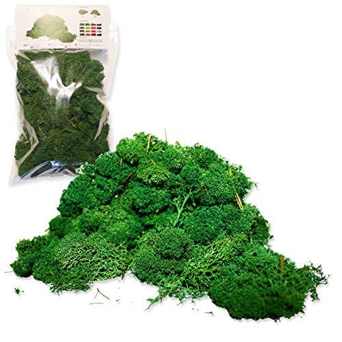 Liquen Preservado Premium 150 gr. Color Verde Bosque. Musgo Preservado. Uso: Cuadros Vegetales Preservados, Diorama, Presepio, Modelismo.