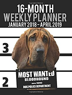 2018-2019 Weekly Planner - Most Wanted Bloodhound: Daily Diary Monthly Yearly Calendar Large 8.5