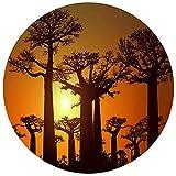 JHGAA Rompecabezas Redondos Grandes para Adultos 1000 Piezas, Rompecabezas de Pintura en, Paisaje de árbol de Baobab - Rompecabezas de Papel de Entretenimiento en el hogar 26.5x26.5 Pulgadas