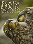 Beak and Brain
