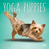 Yoga Puppies 2020 7 x 7 Inch Monthly Mini Wall Calendar, Animals Humor Puppy