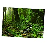 B Blesiya Pegatina PVC Imagen 3D Pintura HD Complimentos Pecera Acuario Plantado Fácilmente Cómodo - 61x30cm