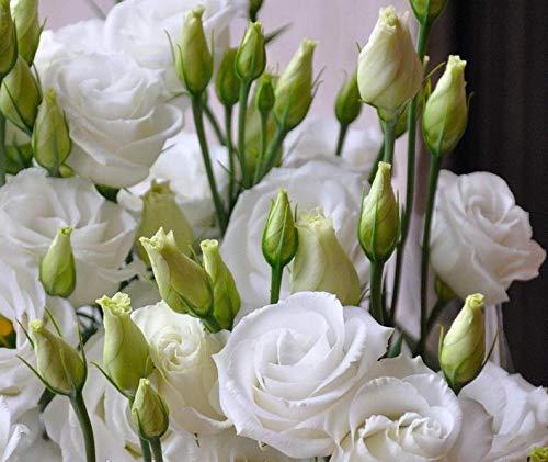 Soteer Garten - 100 Stück Eustoma Lisianthus Samen Blumensamen Bonsai Seltene Mehrjährige winterhart für Garten Balkon/Terrasse