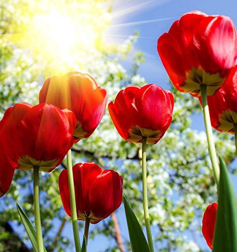 Adultos Rompecabezas 500 Piezas Pétalos De Rosas Rojas Con Amor Juguete De Regalo Ideal La Mejor Decoración Para El Hogar De Bricolaje 87x57cm