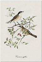 とげのある枝に赤いベリー9018329(大人のためのプレミアム500ピースジグソーパズル52x38cm)の2つのOrtheanウグイス鳥のHDヴィンテージ詳細水彩イラスト