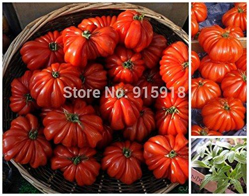 PRODUITS HOO - Graines Légumes RARE Tomate « Marmande » Graines - 50 Graines TOP qualité, jardinage domestique bricolage,! Nouvelle arrivee !
