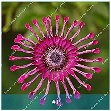 VISTARIC 8: Hosta Samen Bonsai Topfpflanze seltenes Kraut Blühende Pflanzen Bodendecker Seed-Hausgarten Zier Easy Grow 100 PC/Beutel 8