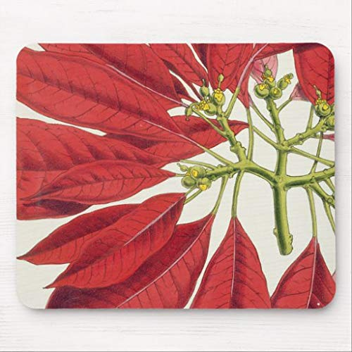 Mouse Pad for Computer with Non-Slip Rubber Base Poinsettia Pulcherrima Colour Litho Gaming Mousepad for Laptop PC, 7.1x8.7 inches