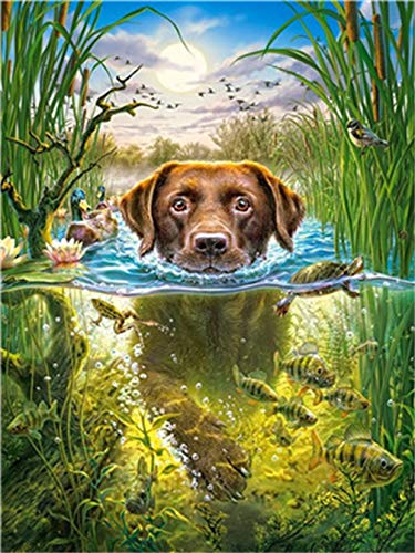 DIY Oil Painting, Paint by Numbers for Adults and Children Over 6 Years Old, Interesting and Easy to Follow,Swimming Dog(20 x 16 inches)