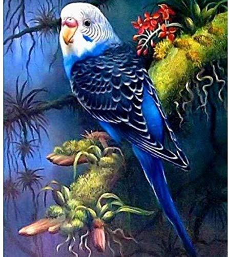 Malen nach Zahlen für Erwachsene schöne Papagei DIY Ölgemälde von Anzahl Kits auf Leinwand 16 x 20 Zoll (Rahmenlos)