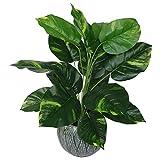 Leaf Design UK Kunstpflanze Teufels-Efeu Scindapsus Aureus, Kunststoff, 60 cm, Schwarz