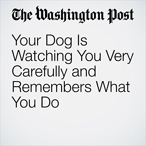 Your Dog Is Watching You Very Carefully and Remembers What You Do audiobook cover art