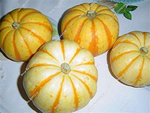 Graines de citrouille Cucurbita fil d'or fruits citrouille melon et légumes des semences meilleures ventes de l'extérieur, Bonsai 30 Plantes en pot 2 pièces