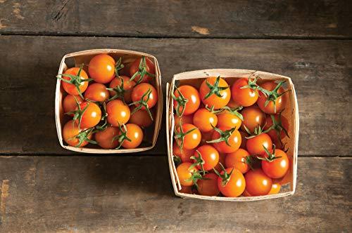 sun sugar tomato - 2