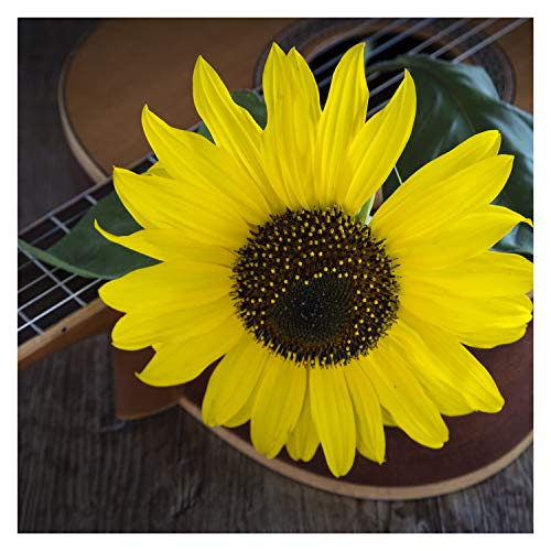 Happy Birthday Country Bluegrass Banjo