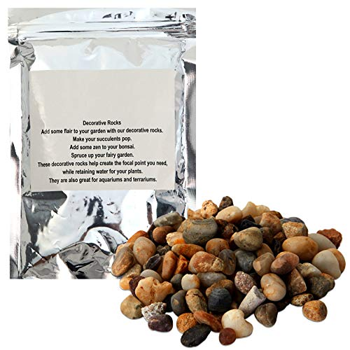 Decorative Gravel, Pebbles for Succulents and Plants (2 lbs)