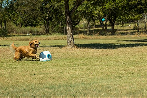 Best Automatic Ball Launchers For Dogs