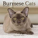 Burmese Cats - Burma Katzen 2020: Original Avonside-Kalender [Mehrsprachig] [Kalender] (Wall-Kalender)
