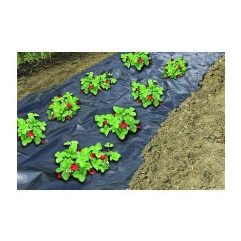 Plastico para huerto negro invernadero antimaleza, tela plantar hortalizas sin hierbas. 1.5x10 metros.Film de PE de acolchamiento para plantación de hortaliza