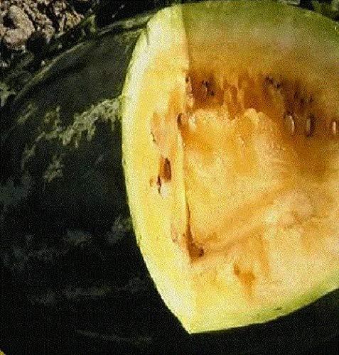 AGROBITS - Semences de pastèque Bio Non OGM - Orange - Extrêmement Doux