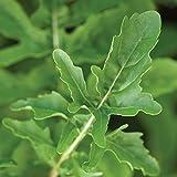 Burpee Rocket (Organic) Arugula Seeds 1000 seeds