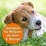 Quiko 077310 Ardap Spot on  Zecken und Flohschutz für mittelgroße Hunde, 10 – 25 kg - 6