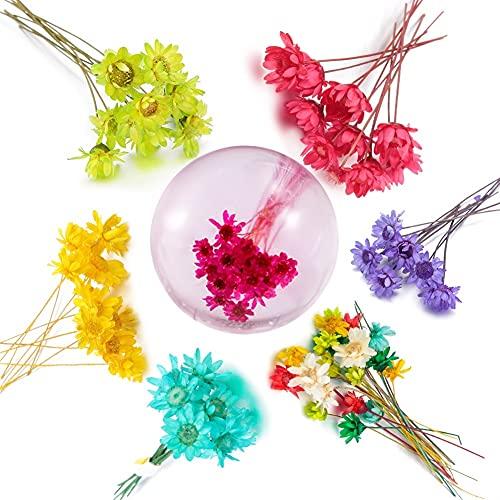 TJYEDUW 10Pcs Star Dry Flower DIY Epoxy Handmade Materials Filler Dried Flowers Stone Jewelry Making Resin Crafts Desk Decor (Color : Green)