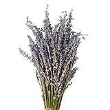 Lavande Séchée Ultra Bleu Faisceaux Bouquet de fleurs séchées naturelles pour la Décoration Intérieure L'artisanat Cadeau Mariage ou Toute
