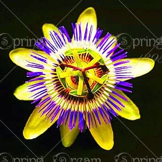 5pcs Passion Flower (Passiflora incarnata), plant Exotic Passion Fruit Seeds Passiflora Edulis for home garden 5