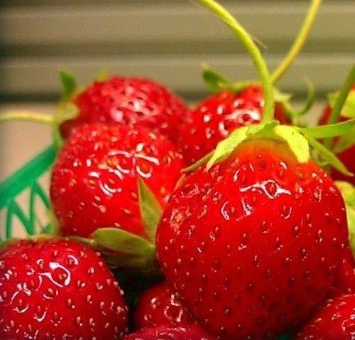 FERRY Bio-Saatgut Nicht nur Pflanzen: Mara des Bois immertragende Stroh 50 Best Geschmack- re Seed