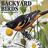 BACKYARD BIRDS 2020 WALL CAL - Willow Creek Press