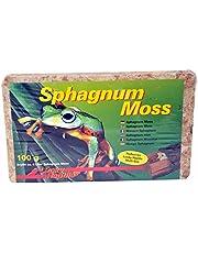 Lucky Reptile Sphagnum Moss Terrarienmoss