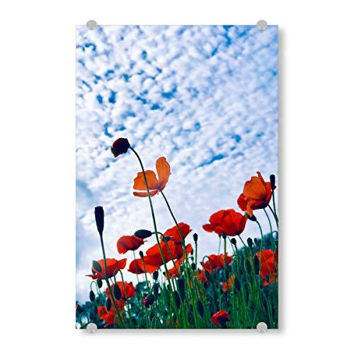 artboxONE Acrylglasbild 30x20 cm Natur Mohnfeld und Schäfchen-Himmel - Bild mohnfeld floral Flowers