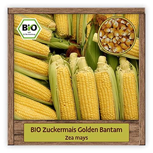 BIO Zuckermais Samen traditionelle Saatgut Sorte Golden Bantam Mais (Zea mays)