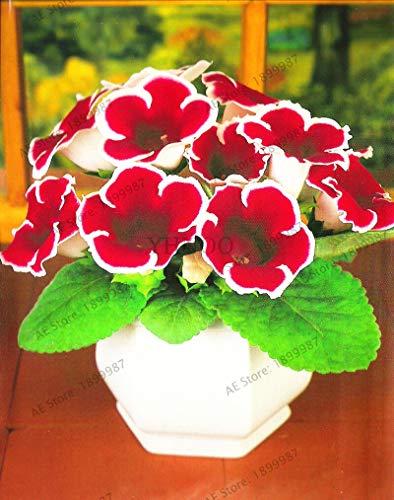 Kalash New 100pcs Gloxinie Blumensamen für Garten Rot Weiß