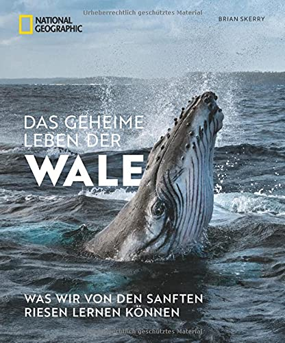 Bildband: Das geheime Leben der Wale. Was wir von den sanften Riesen lernen können. Mit Fotos von preisgekrönten National Geographic Fotografen.