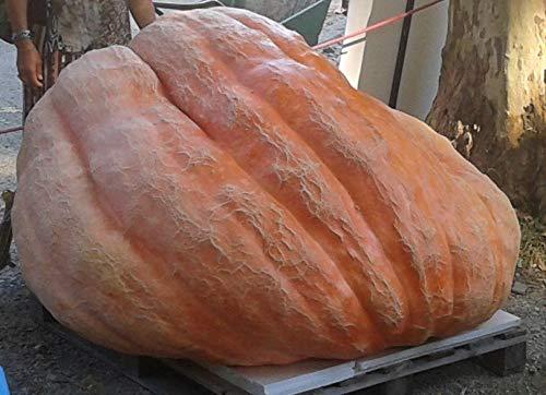 GHINO DE Tacco Semi Zucca Atlantic Giant