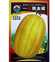 ゴールドハニーメロン種子早熟 バルコニースウィートフォーシーズンイエロースキンメロン種子四季フルーツホーム