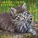Maine Coon Kittens 2021 Calendar