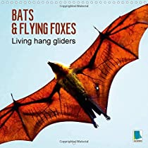 Bats and flying foxes: Living hang gliders 2016: Night vision using sonar - bats and flying foxes (Calvendo Animals)