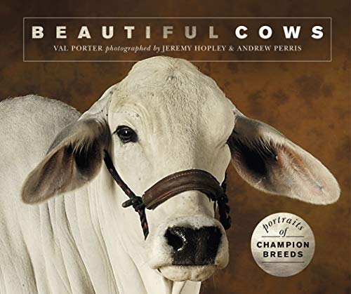 Beautiful Cows: Portraits of champion breeds (Beautiful Animals) (English Edition)