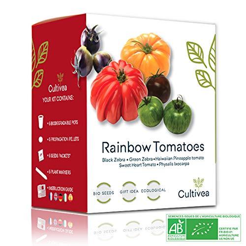 Cultivea Rainbow Tomatoes – Bio Tomaten Anzuchtset -100{ba4c92dd31bbb9084315b51e89524320b28e55c111c7d3a42c80e82498cf4cff} Öko Samen – Indoor Garten – Das perfekte Geschenk – Gemüse Set (Green & Black Zebra, Sweet Heart, Haiwaiian Pineappel, Physalis) – DIY