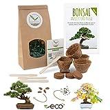 Bonsai Kit incl. eBook GRATUITO - Set con macetas de...