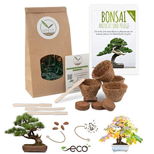 Bonsai Starter Kit Anzuchtset inkl. GRATIS eBook - Pflanzset aus Kokostöpfen, Samen & Erde - nachhaltige Geschenkidee für Pflanzenfreunde (Mittelmeer Pinie + Amerikanischer Amberbaum)