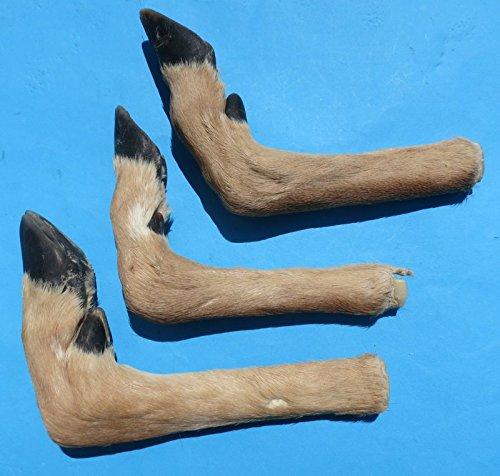 TruBlu Supply Real Deer Foot Feet Hoof L Shaped for Making...